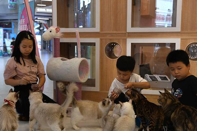 """娱乐休闲新选择 猫咖""""撸猫""""受欢迎"""