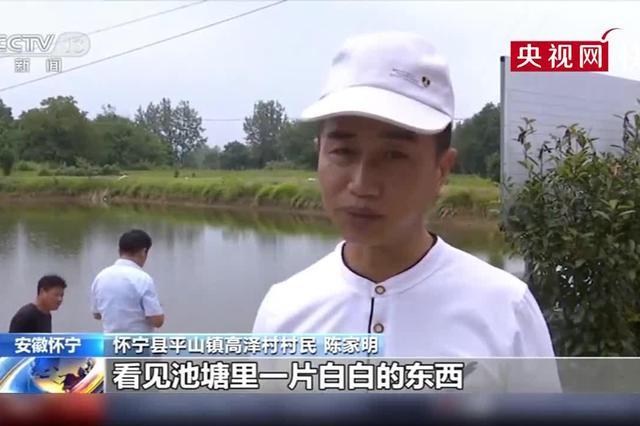 安徽怀宁:一池塘发现大规模桃花水母