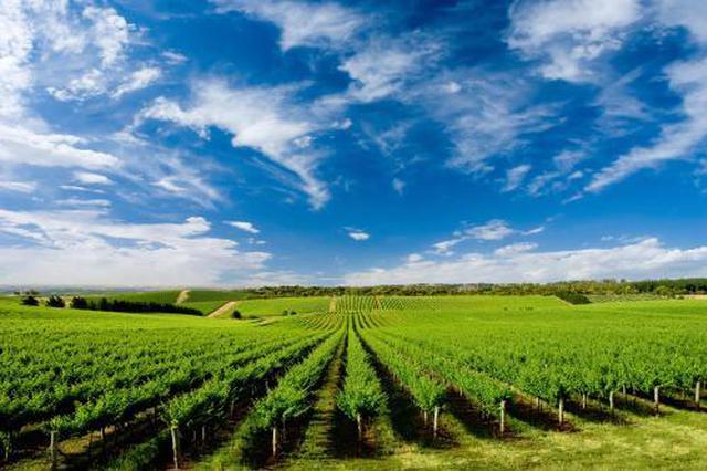 长三角首个数字农业产业带落地安徽宿州