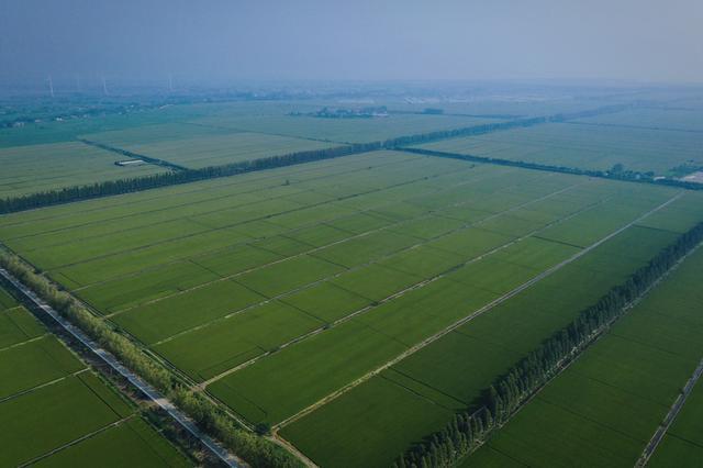 藏粮于技 大圹圩农场智慧农业保障粮食安全