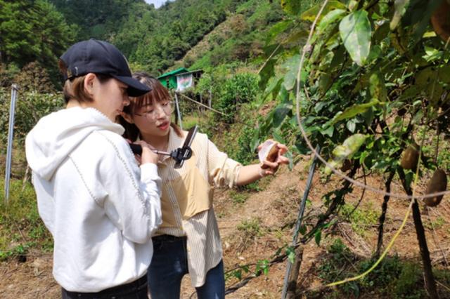 徽州区:电商直播 助力农特产品销售