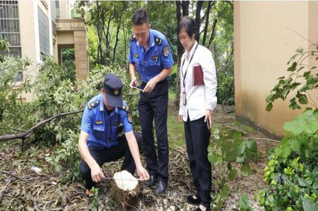 砍一棵树 罚4500元且须补种!合肥一物业公司被罚