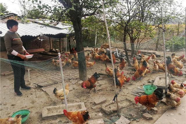 安徽六安:定点帮扶有妙招 家庭养殖出奇效