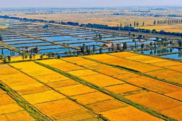"""池州:""""中国农民丰收节""""来了"""