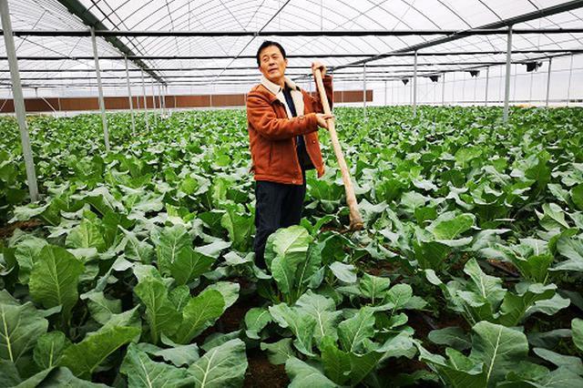 蒙城县:产业带动就业实现脱贫致富