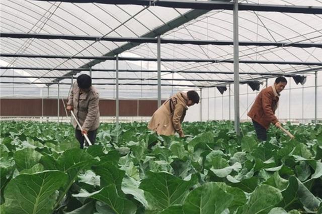 """亳州:大棚蔬菜长成致富好""""丰""""景"""