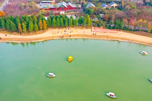 安徽亳州 :林拥城秋色美