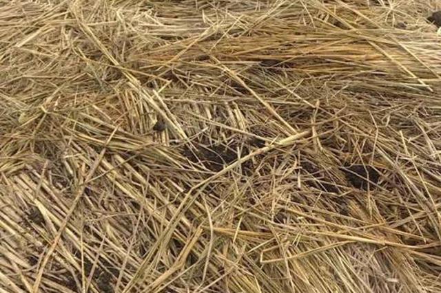 安徽举办秸秆暨畜禽养殖废弃物综合利用产业博览会