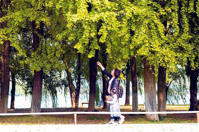 安庆:暖阳下 赴一场深秋之约吧