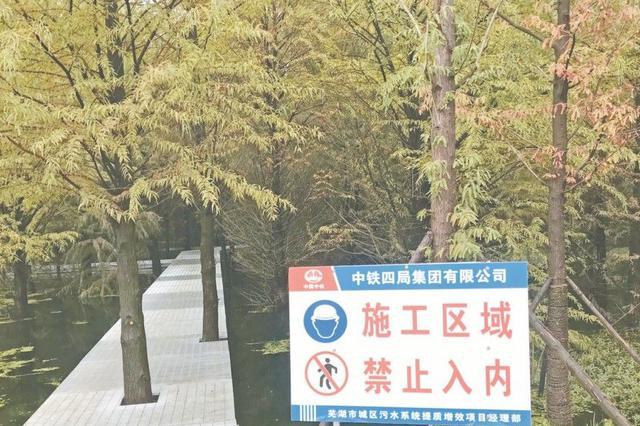 """这里的落羽杉林即将进入""""最美观赏季"""""""