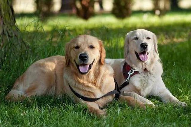 《芜湖市养犬管理条例》解读