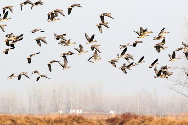 为候鸟迁徙保驾护航