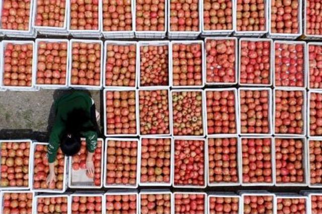 巢湖最大番茄生产基地将建成