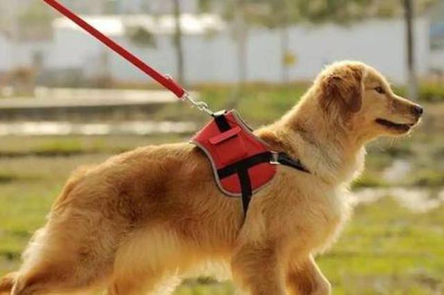 """官方平台上线半年 合肥首份养犬报告""""出炉"""""""