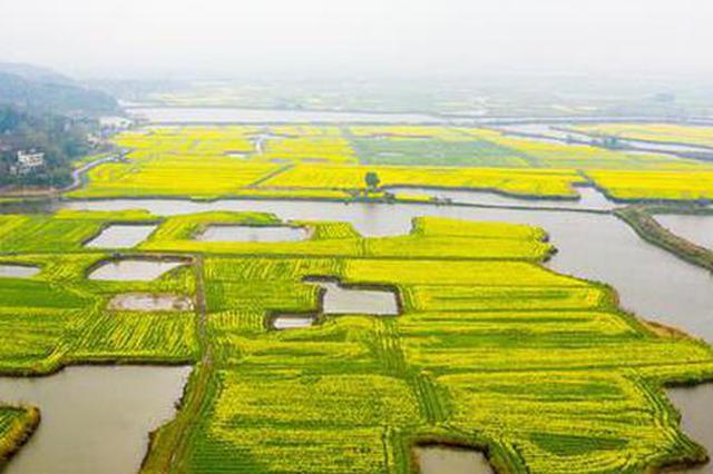 安徽芜湖:响水涧万亩油菜花海开门迎客
