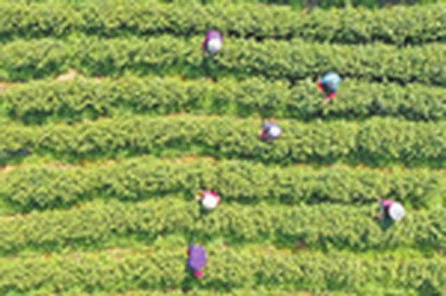 芜湖繁昌区:打造特色农业示范基地