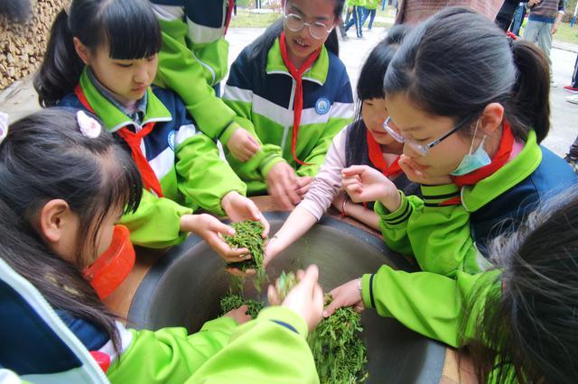 茶庄茶博园迎来安庆市第一批研学团队