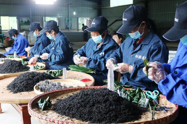 """祁门县""""五一""""期间粽茶俏销生产忙"""