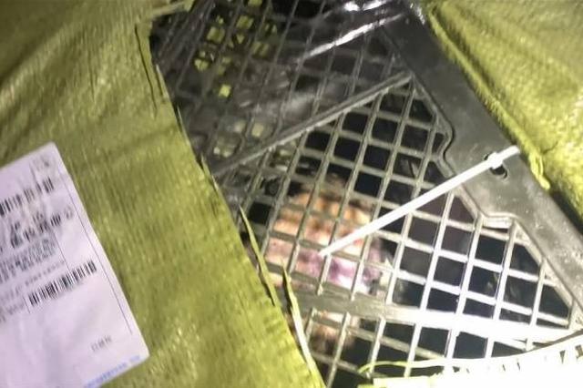 中通回应寄递活体动物事件:暂停相关网点揽收业务