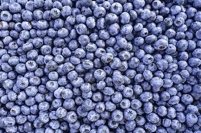 """凌笪镇:以""""莓""""为媒 创业兴村"""