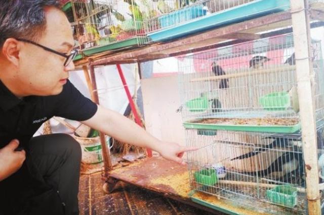 芜湖市对花鸟鱼虫市场开展野生动物专项清理打击行动