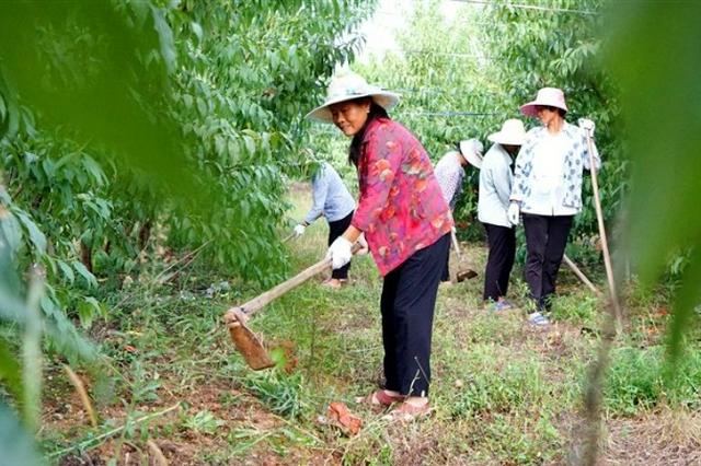 发展现代农业 推进乡村振兴