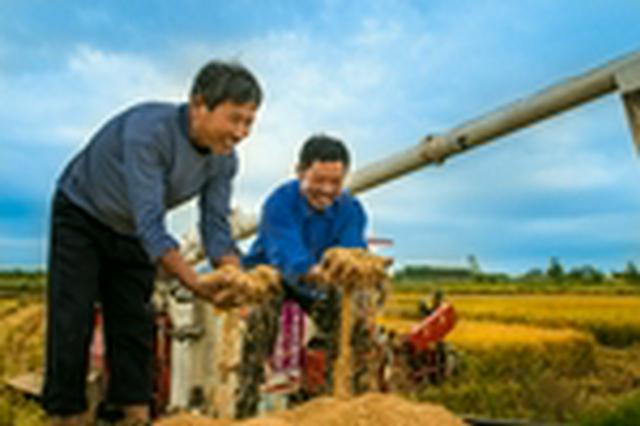 定远县秋粮喜获丰收市场质优价稳