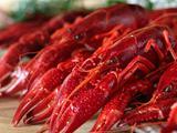 安徽庐江龙虾迎来捕捞季  农民增收心欢喜
