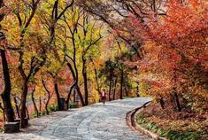 深秋滁州秋景 满山彩林之美
