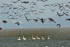 池州升金湖候鸟归来 湖光水色怡人