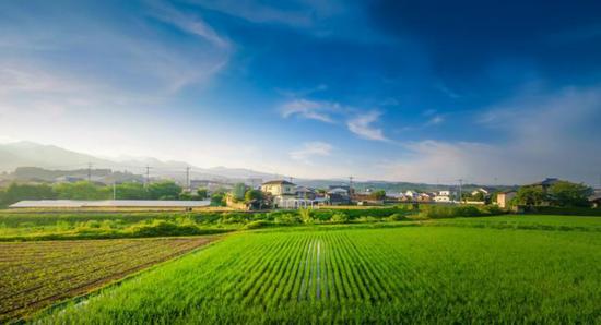 涡阳县:基层党组织开拓思路 全力推进乡村振兴