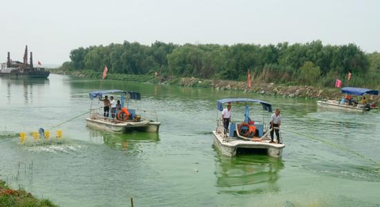 长临河镇施口社区环巢湖段,专业人员冒着高温打捞蓝藻