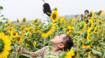 """合肥中秋小长假徜徉""""四季花海"""""""
