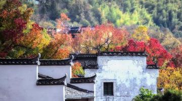 徽州古村镇霸占了秋天一半的美