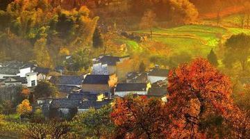 有一种绝美秋色叫塔川