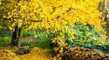 2019池州秋季赏花图来了