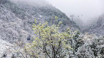 天柱山景区降春雪