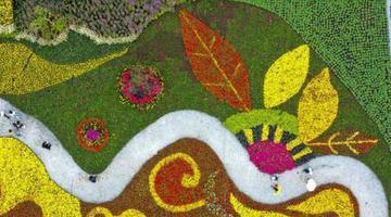 安徽宣城:申博在线会员登入,花卉产业助脱贫