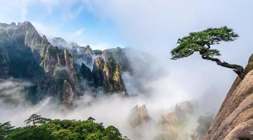 黄山模式:申博线路检测登入,为世界遗产保护树标杆