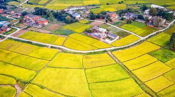 安徽肥东 :菲律宾太阳城网站申博,金色田园 丰收在望