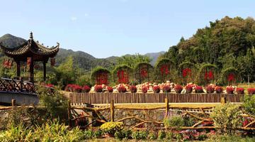 安徽南陵:多彩活动庆丰收