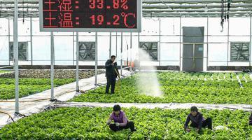 """安徽合肥:138申博亚洲登入,现代农业""""一盆菜"""""""