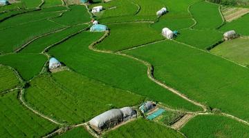 安徽庐江:仲夏田园风景线
