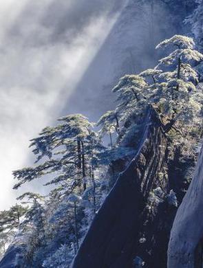冬日黄山雪 琼树竞娇娆