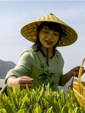 茶旅融合助力乡村振兴