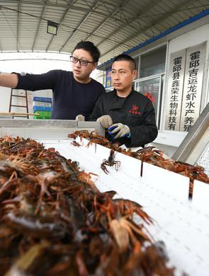 霍邱:龙虾致富