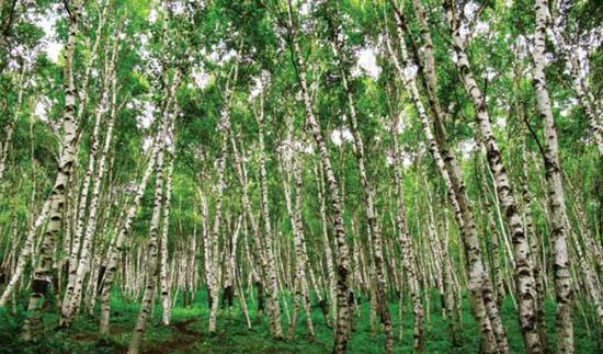 因地制宜 分类施策 宿州市森林可持续经营成效明显