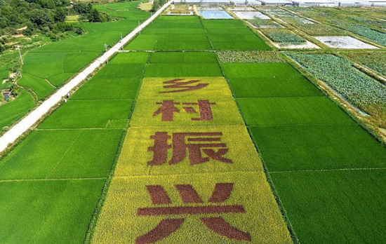铜陵枞阳县:壮大集体经济 助力乡村振兴