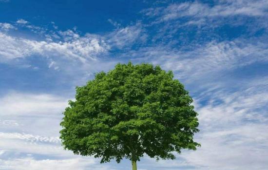 亳州市以林为笔绘制绿色碳汇