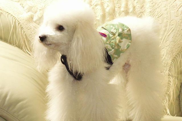 盘点23种最常见的宠物狗